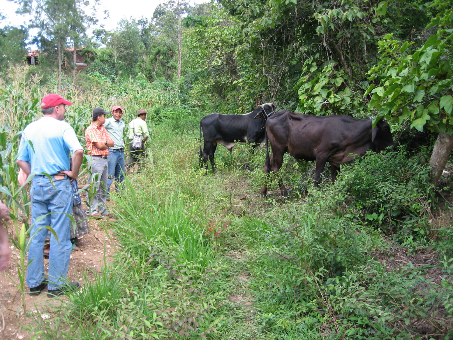 Cattle Project